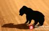 【美天棋牌】江卓尔:熊市由牛市产生 本轮至少需要调整1年