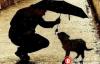 【美天棋牌】BitBay为流浪动物设置接受数字货币捐赠的收容所