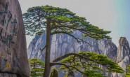 【美天棋牌】中国最古老的10颗大树:最后一棵见证了华夏之路!