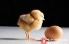 【美天棋牌】加密货币和区块链是鸡和蛋的关系吗?