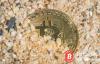 【美天棋牌】反映加密货币价格触底的UXTO是怎么一回事?20%正在消失?