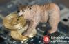 """【美天棋牌】2019 年加密货币还是走不出""""熊市""""阴霾?"""