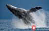 【美天棋牌】过去两月,加密货币巨鲸大户悄悄抄底