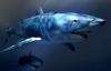 【美天棋牌】德州扑克从鱼到鲨鱼的进化