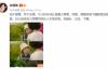 """【美天棋牌】左小青承认与大20岁老公离婚!""""始于爱情,终于友情"""""""