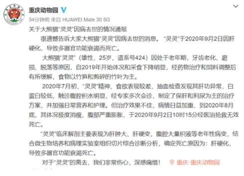 【美天棋牌】重庆动物园25岁大熊猫灵灵去世  经医治抢救无效死亡