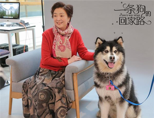 """【美天棋牌】《一条狗的回家路》被赞""""假期必看"""""""