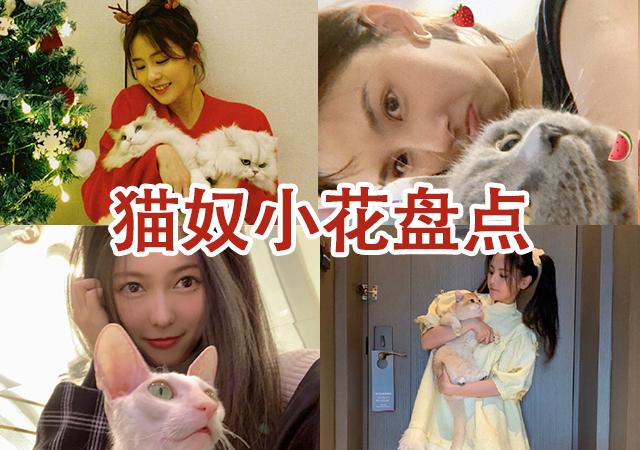 【美天棋牌】娱乐圈资深猫奴小花盘点 谁才是爱猫狂人?